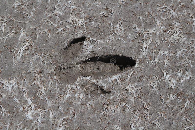 鸸脚印 免版税库存照片