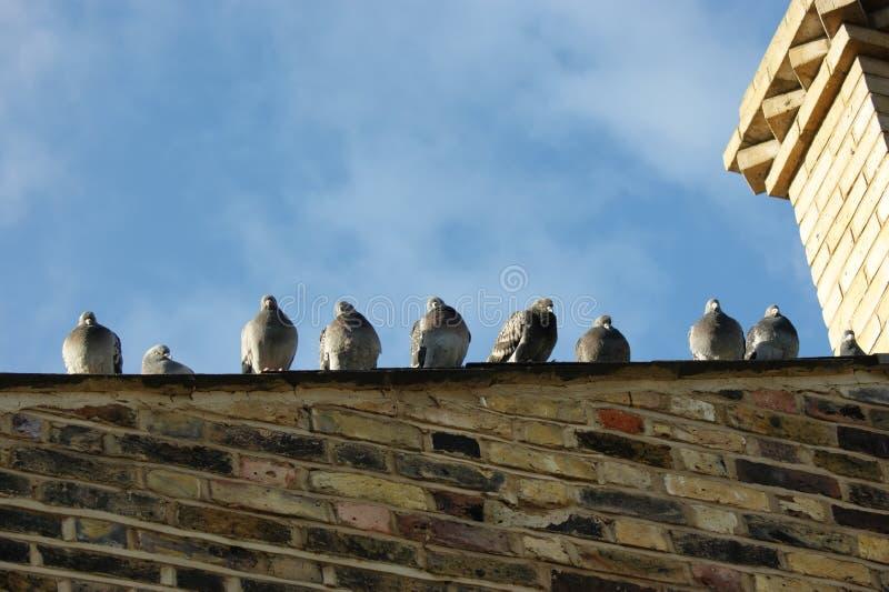 鸽子喘气了屋顶  免版税库存照片