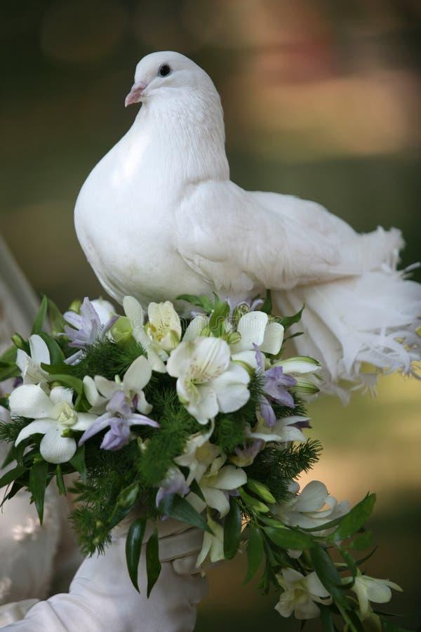 鸽子婚礼 库存照片