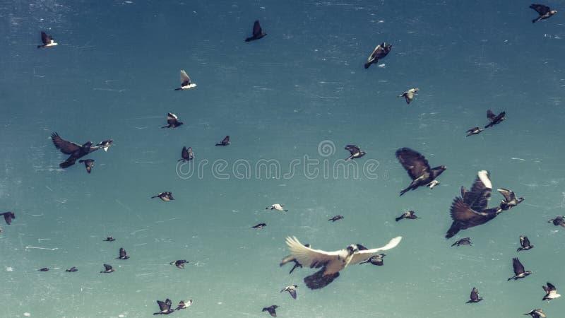 鸽子群在蓝天、葡萄酒被定调子的和抓痕的 自由目的地旅行概念 免版税库存图片