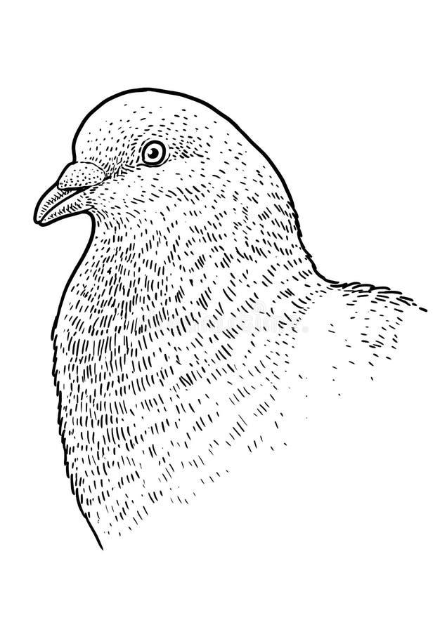 鸽子顶头画象例证,图画,板刻,墨水,线艺术,传染媒介 向量例证