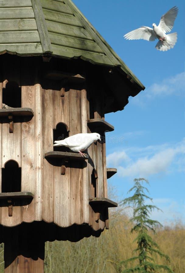 鸽房 库存图片