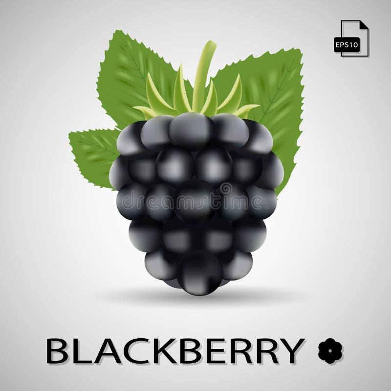 黑鹂 甜果子 在背景的森林莓果 皇族释放例证