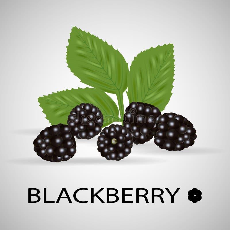 黑鹂 甜果子 森林莓果 向量例证
