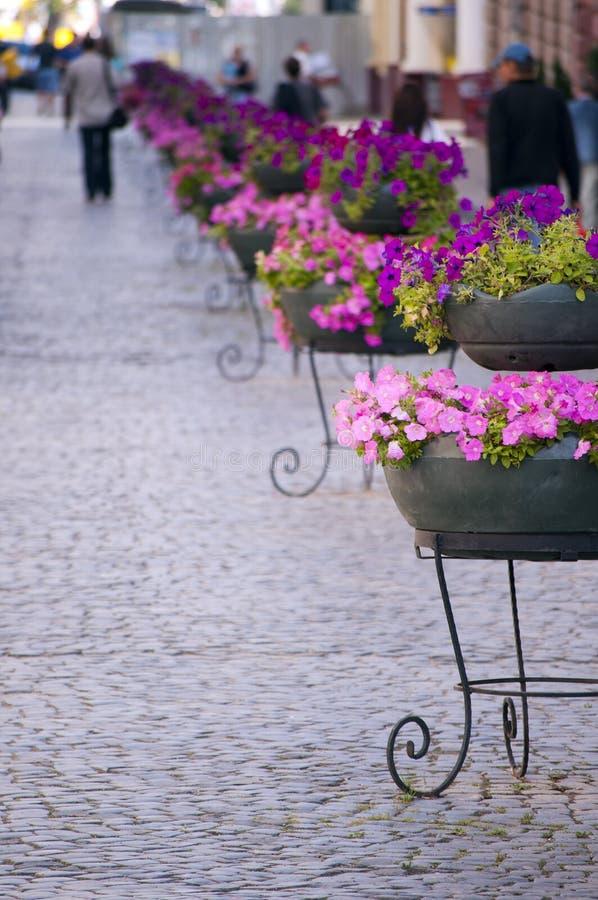 鹅卵石开花主要老街道城镇 库存图片