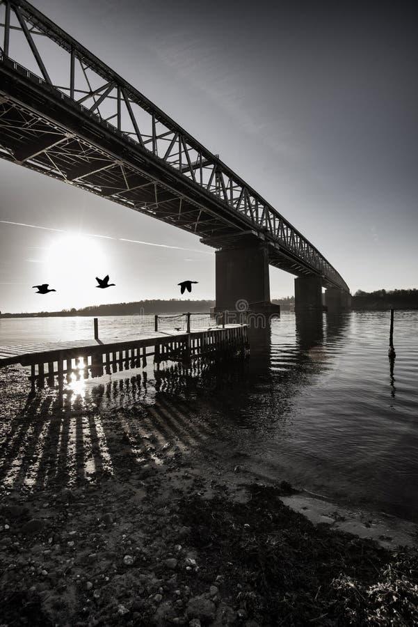鹅和桥梁在丹麦 免版税图库摄影