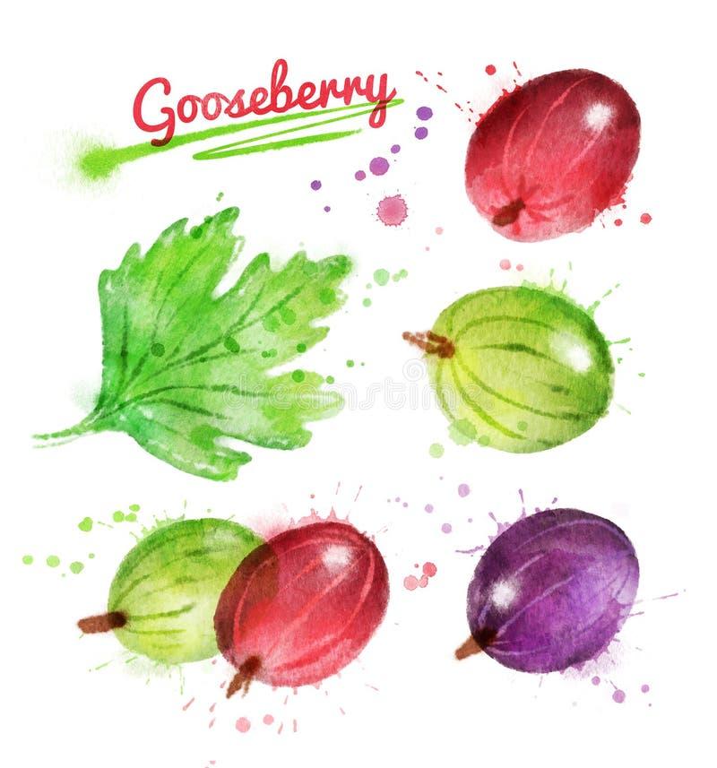 鹅莓的水彩例证 皇族释放例证