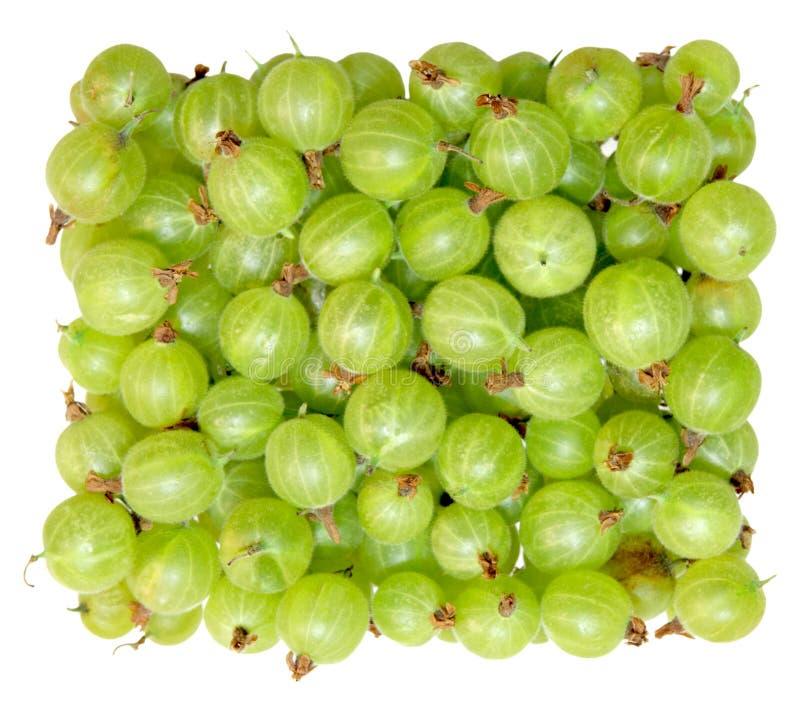 鹅莓绿色 免版税库存图片