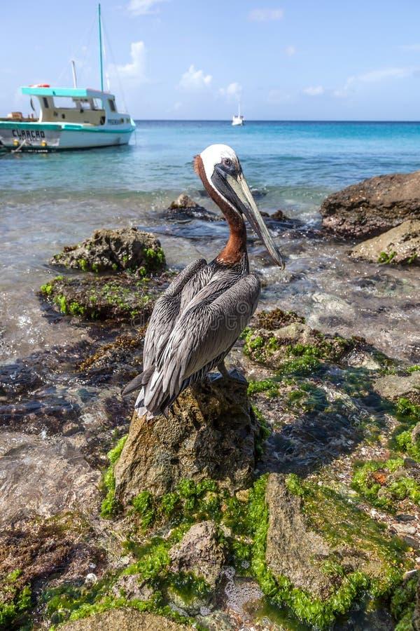 鹈鹕和小船 免版税图库摄影