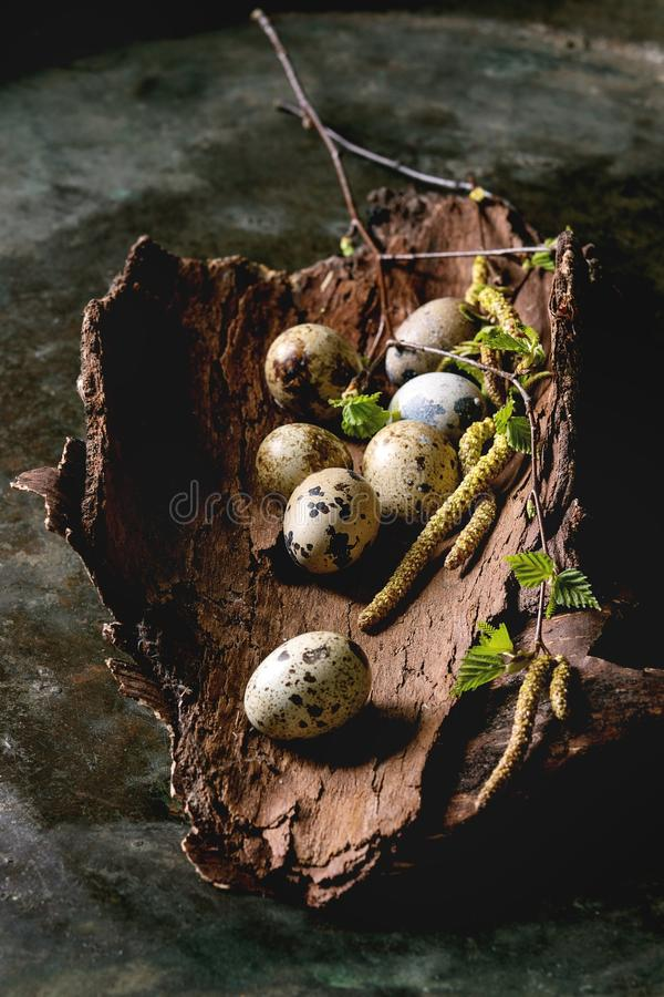 鹌鹑在巢的复活节彩蛋 免版税库存照片
