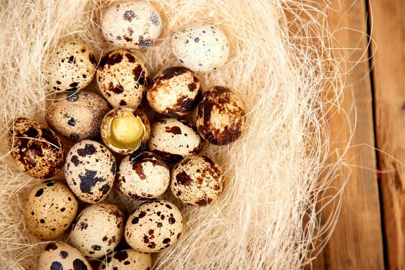 鹌鹑在巢的复活节彩蛋在木背景 免版税图库摄影