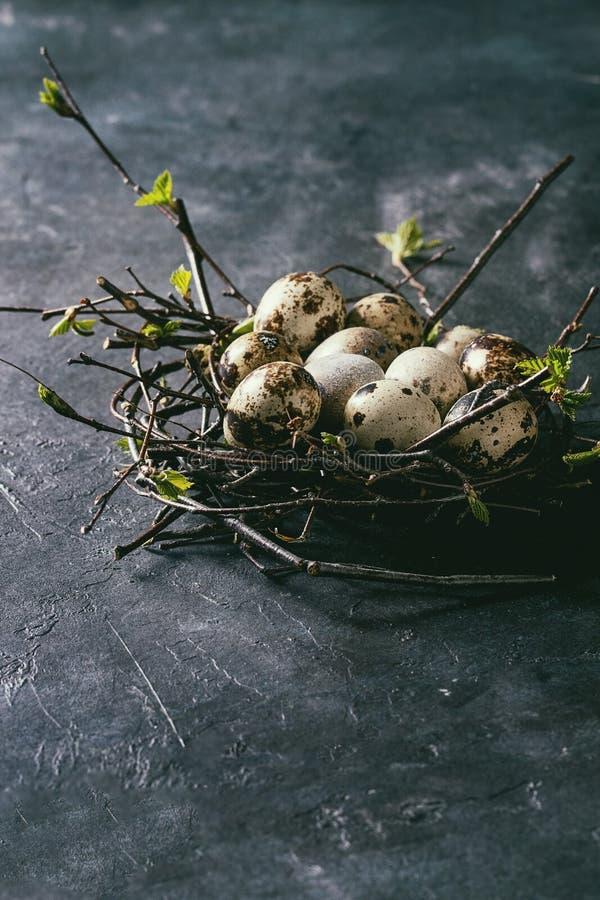 鹌鹑在巢的复活节彩蛋 库存图片