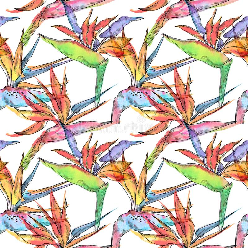 鹤望兰热带植物的无缝的样式 水彩手拉的花和叶子 邀请的设计,婚姻 向量例证