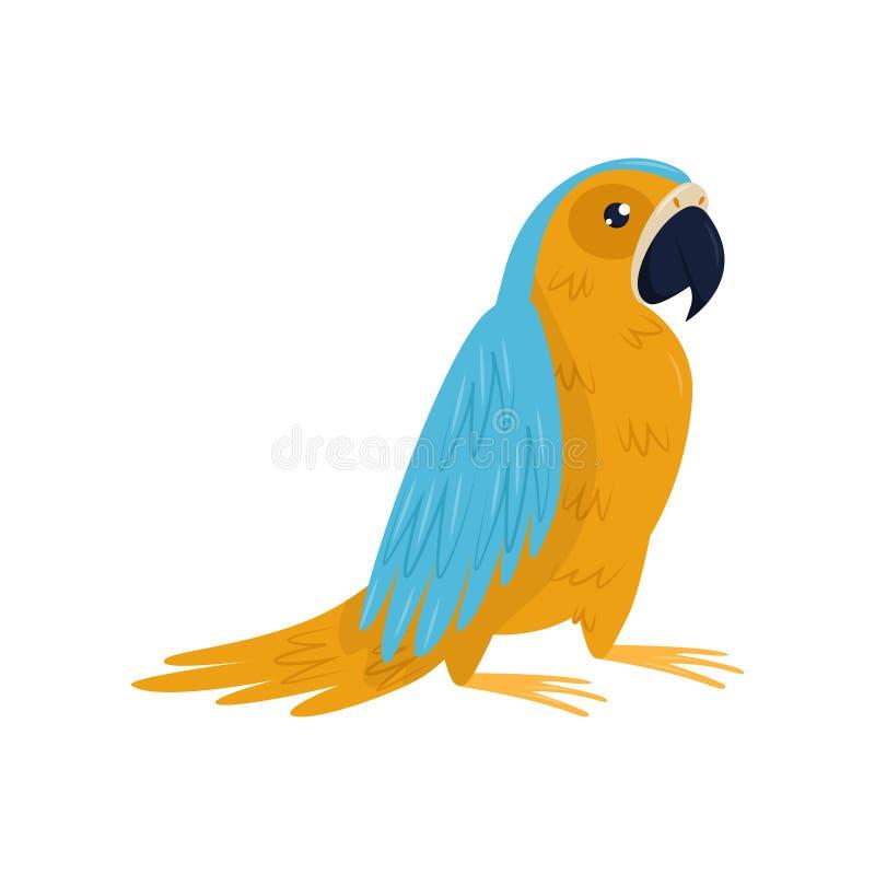 鹦鹉动画片象与蓝色和橙色羽毛的 热带鸟 给的海报,横幅做广告平的传染媒介元素 皇族释放例证