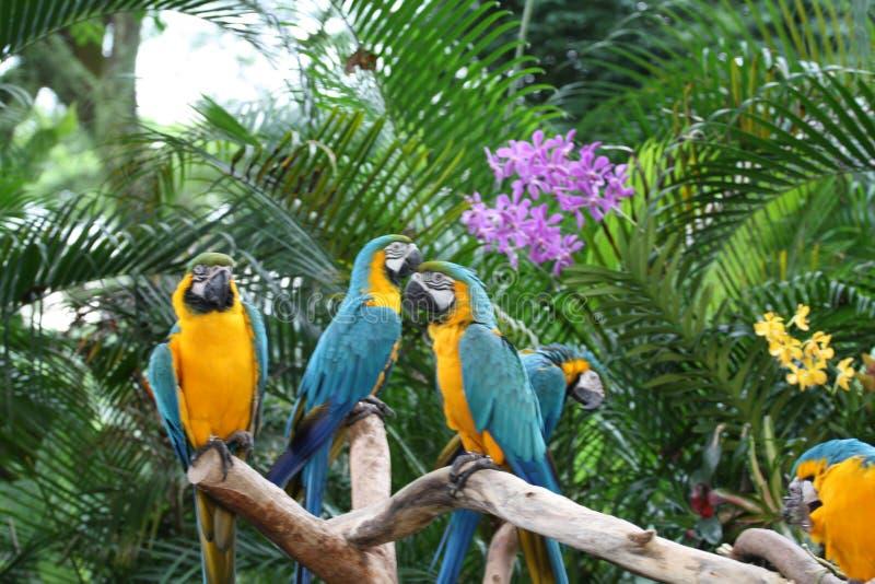 鹦鹉在庭院里 兰花,绿色背景 库存图片