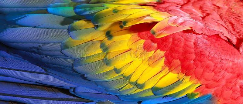 鹦鹉用羽毛装饰异乎寻常的纹理 免版税图库摄影