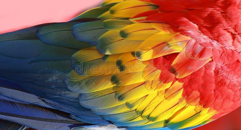 鹦鹉用羽毛装饰异乎寻常的纹理 库存图片