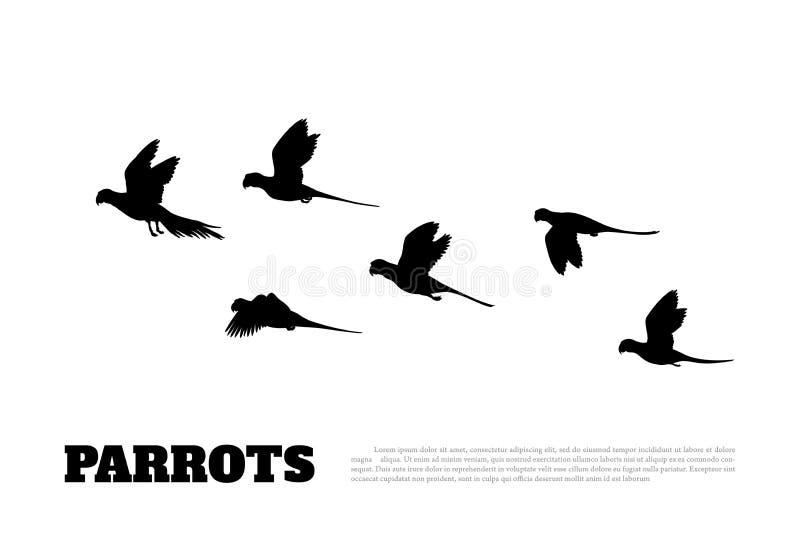 鹦鹉群的黑剪影在白色背景的 澳大利亚的动物 向量例证