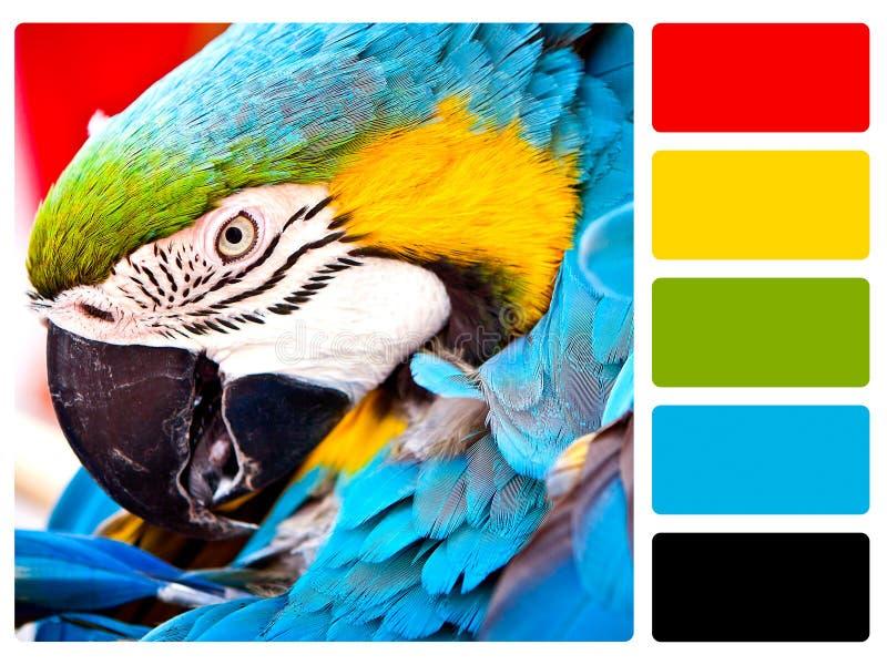 鹦鹉鸟色板显示样片 免版税库存照片