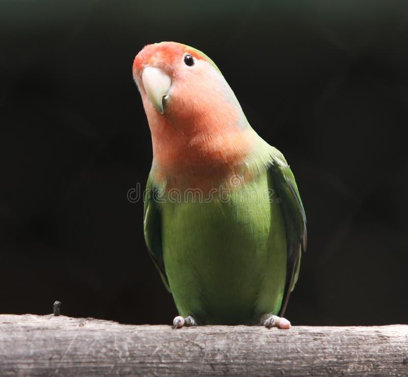 鹦鹉 库存照片