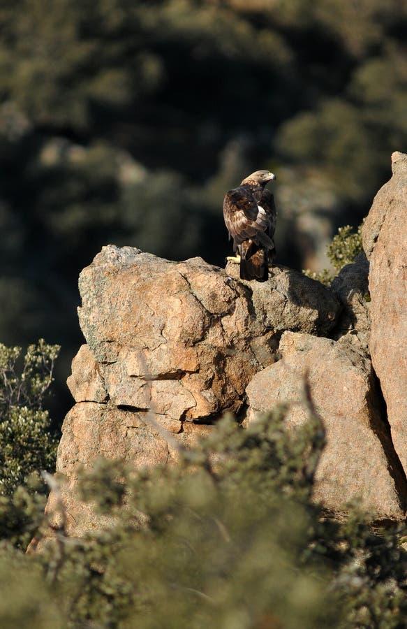 鹫注意岩石您的领域 库存图片