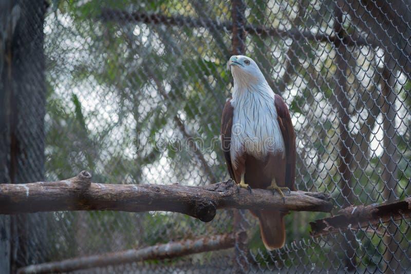 鹰在动物园里 免版税库存图片