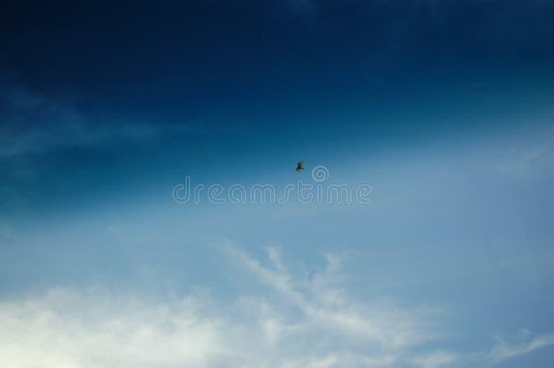 鹰腾飞 库存图片