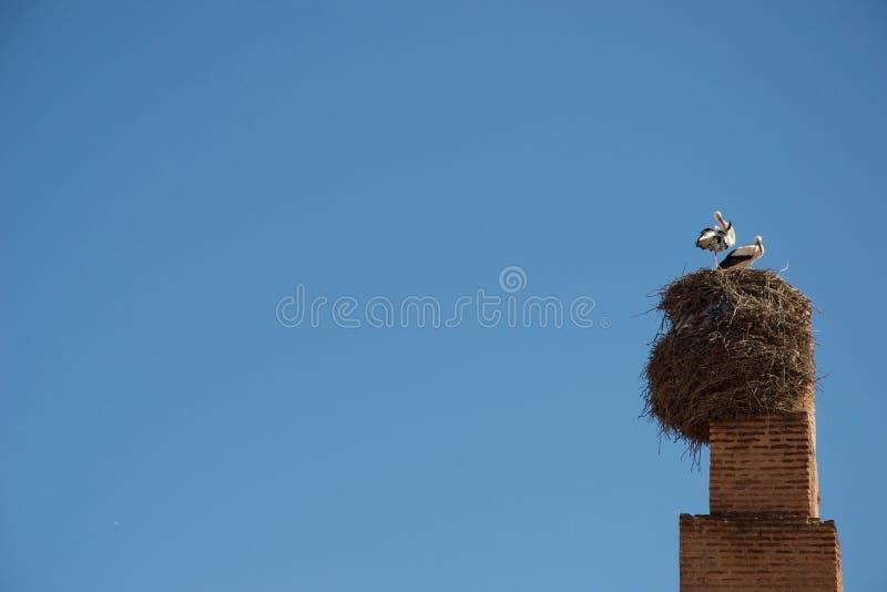 鹳和巢在烟囱 免版税库存照片
