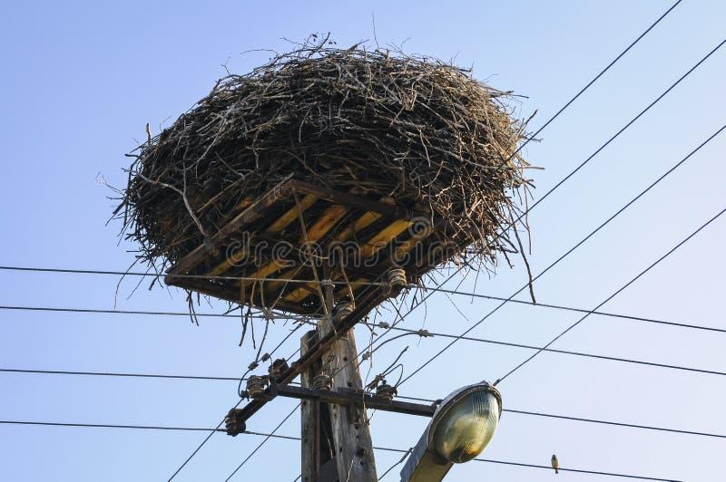 鹳巢在波兰 免版税库存照片