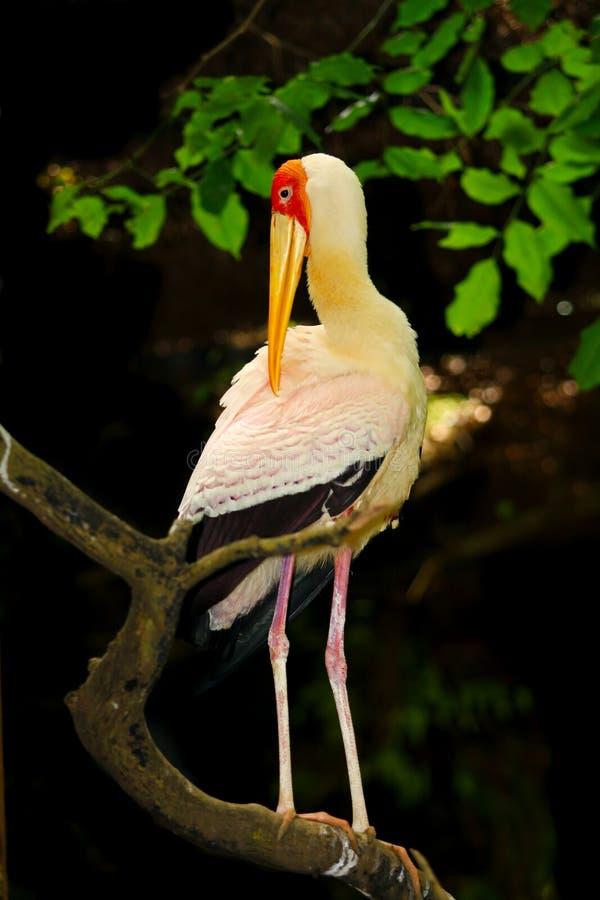 鹳鸟画象  库存图片