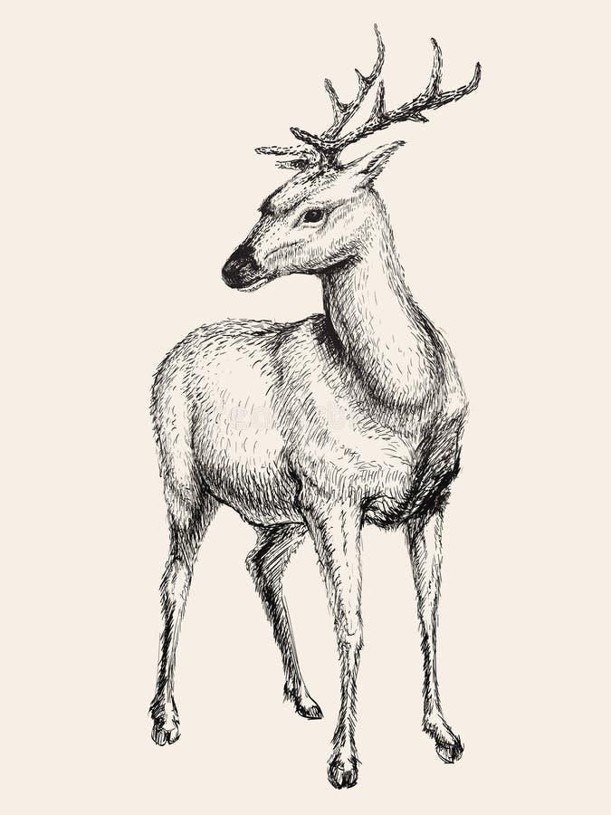 鹿传染媒介例证,手拉,剪影 库存例证