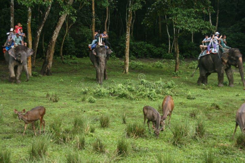 鹿和游人大象的在森林公园chitwan的,尼泊尔 免版税库存照片