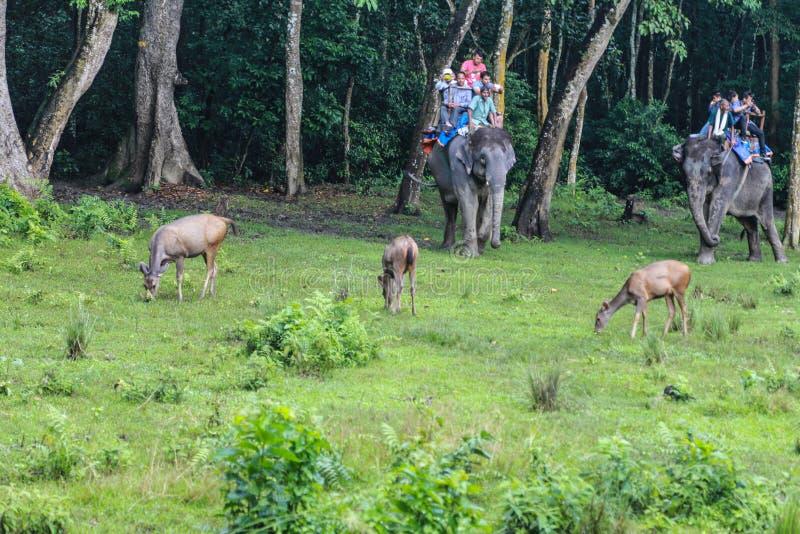 鹿和游人大象的在森林公园chitwan的,尼泊尔 免版税图库摄影