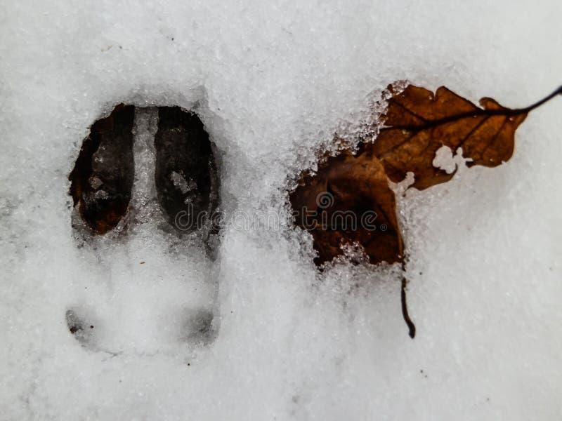 鹿和狼脚印在雪森林里 免版税库存照片