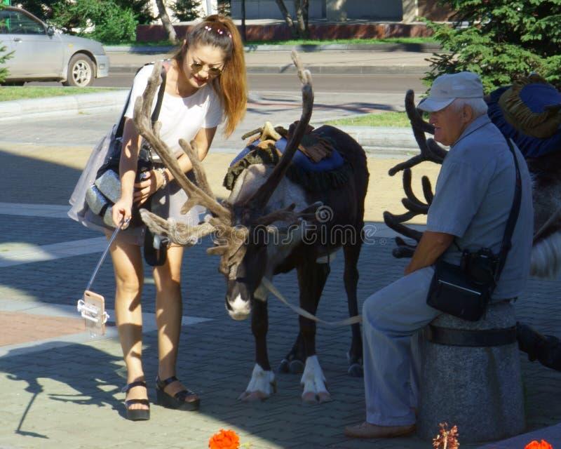 鹿在夏时的城市广场 库存图片