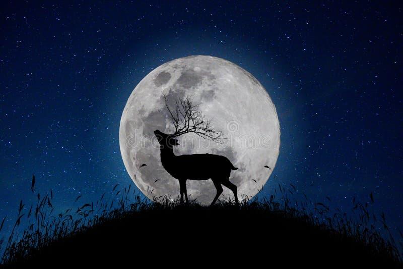 鹿在山站立大月亮背景夜星天空有很多 免版税库存照片