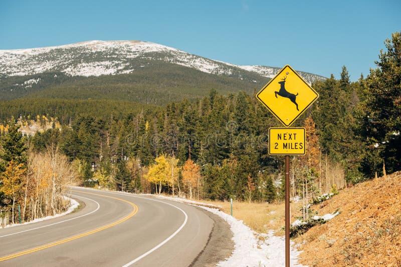 鹿在高速公路的横穿标志秋天 免版税库存照片
