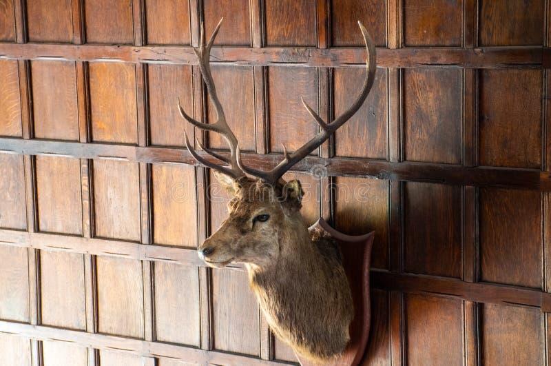 鹿头与垂悬在庄严家的鹿角的 图库摄影