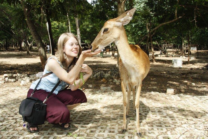 鹿提供的女孩年轻人 免版税库存图片
