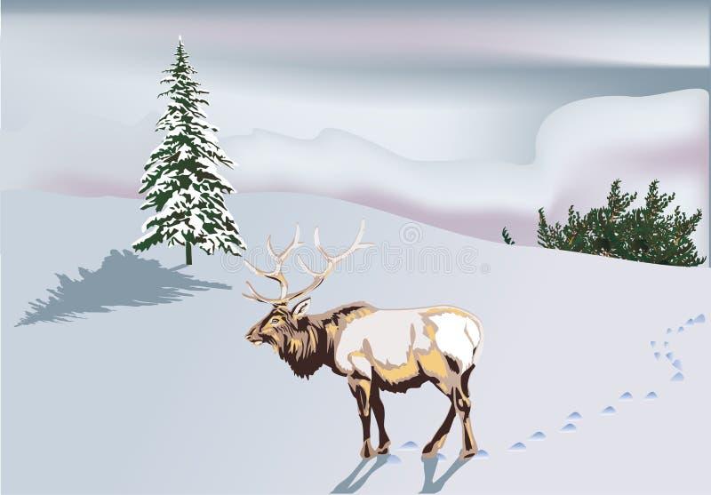 鹿横向跟踪冬天 库存例证