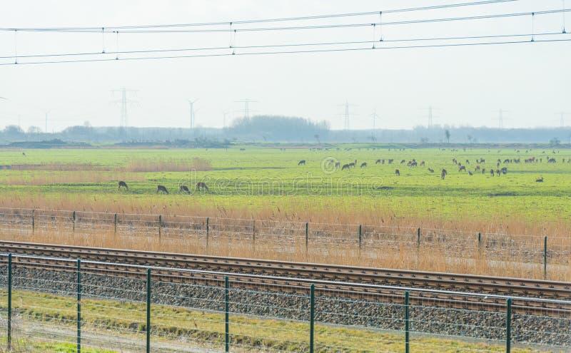 鹿牧群在沿铁路的一个自然公园 免版税库存图片