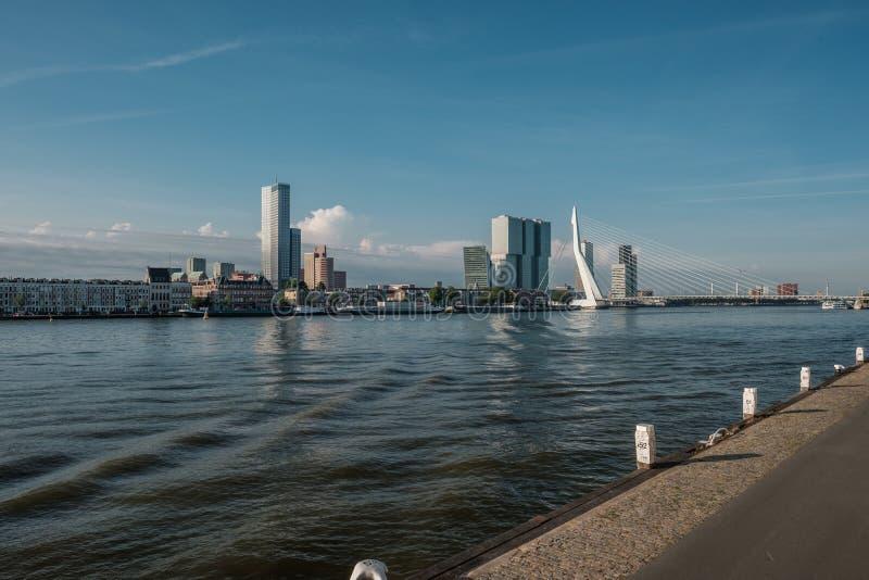 鹿特丹市与Erasmus桥梁和河的都市风景地平线 南荷兰省,荷兰 库存图片