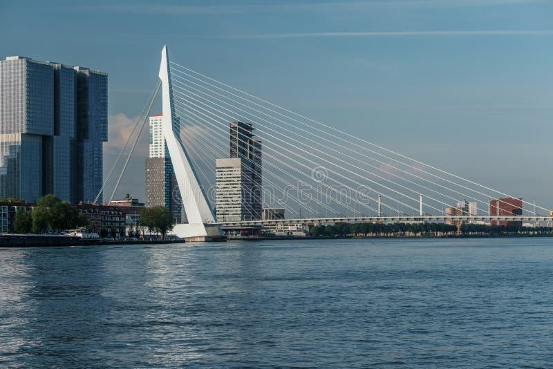 鹿特丹市与Erasmus桥梁和河的都市风景地平线 南荷兰省,荷兰 图库摄影