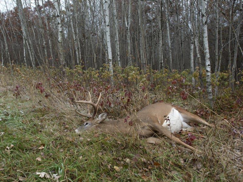 鹿狩猎在明尼苏达 免版税库存图片