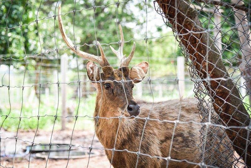 鹿男性 库存照片