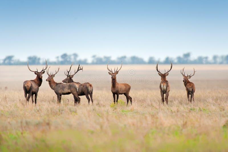 鹿群释放 图库摄影