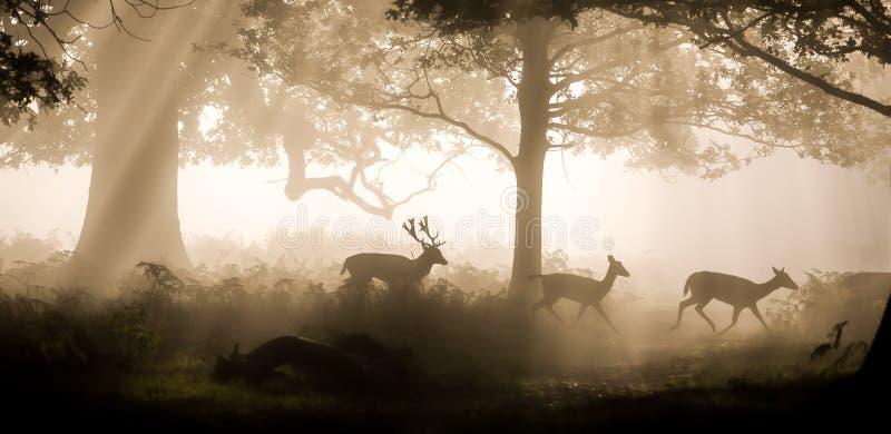 鹿袭击 库存图片