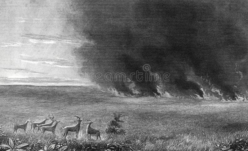 鹿野火例证火牧群的大草原  向量例证