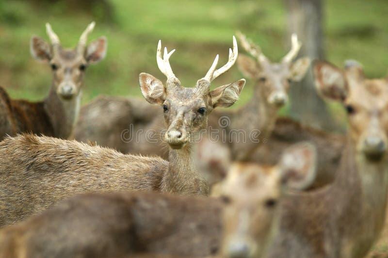 鹿 库存图片
