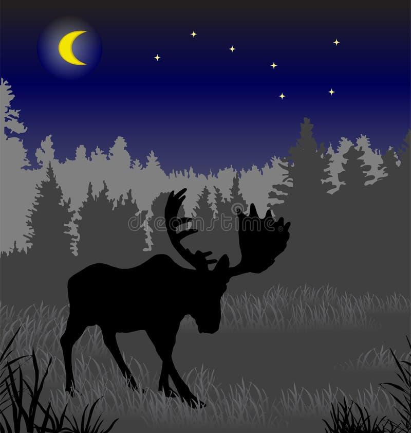 麋在夜森林里 库存例证